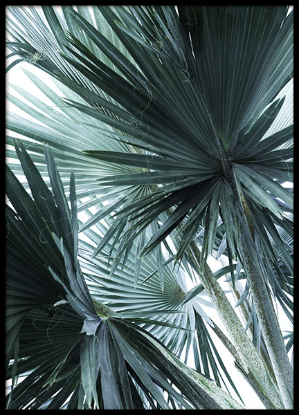 Mint Palms No3 Poster in the group Prints / Floral at Desenio AB (10964)