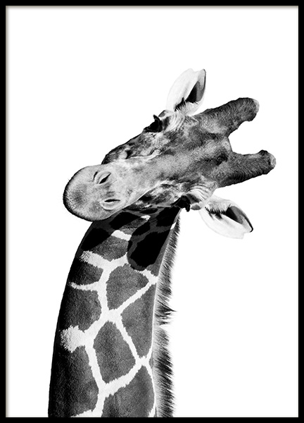 Giraffe Portrait Poster in the group Prints / Animals at Desenio AB (10966)