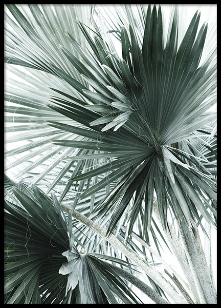Tropical Palm Leaves No2 Poster in the group Prints / Floral at Desenio AB (10980)
