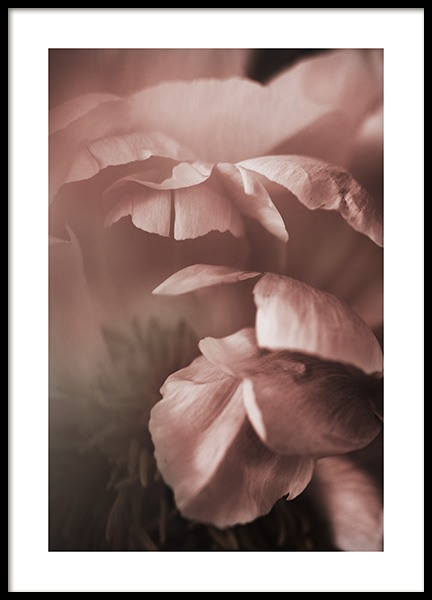 Soft Peony Poster in the group Prints / Photographs at Desenio AB (10992)