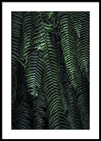 Forest Fern Poster in the group Prints / Photographs at Desenio AB (11000)