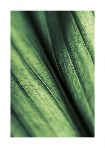 Green Leaf Poster in the group Prints / Floral at Desenio AB (11004)