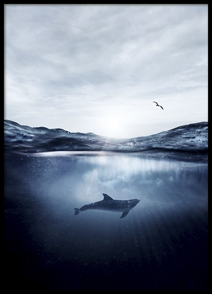 Dolphin Underwater Poster in the group Prints / Nature at Desenio AB (11049)