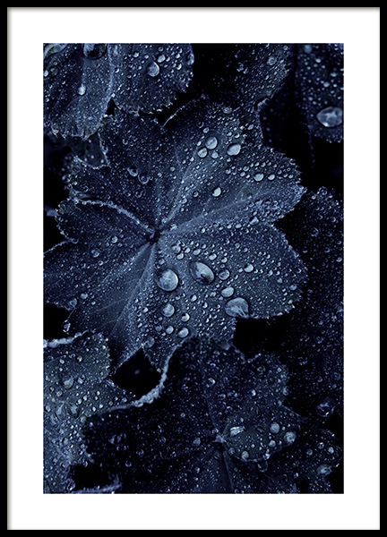 Raindrops on Blue Leaves Poster in the group Prints / Photographs at Desenio AB (11052)