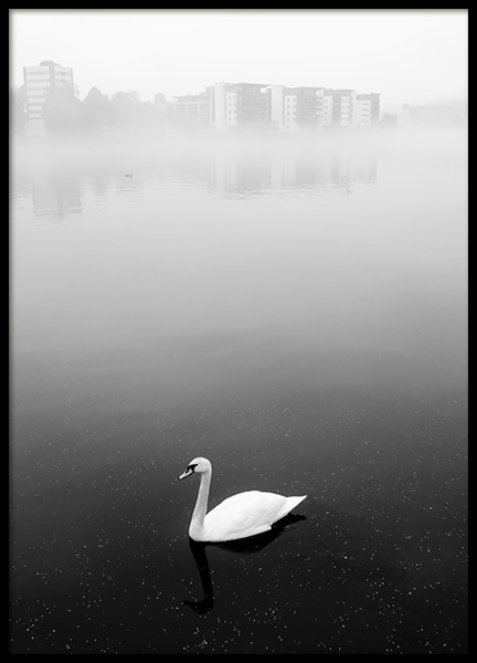 White Swan Poster in the group Prints / Photographs at Desenio AB (11122)