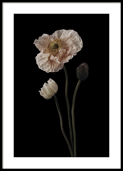 Poppies on Black No1 Poster in the group Prints / Floral at Desenio AB (11174)