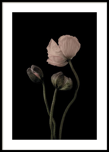 Poppies on Black No2 Poster in the group Prints / Floral at Desenio AB (11175)