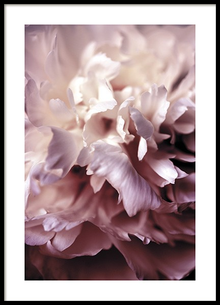Peony Close Up Poster in the group Prints / Photographs at Desenio AB (11186)