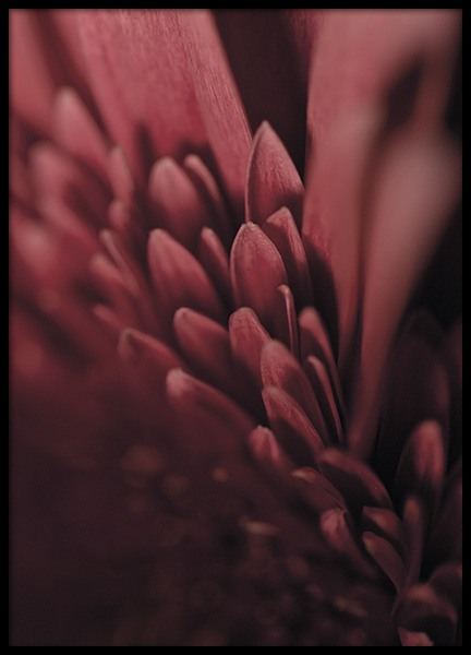 Burgundy Flower Close Up Poster in the group Prints / Floral at Desenio AB (11188)