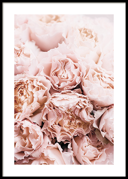 Bouquet of Roses Poster in the group Prints / Photographs at Desenio AB (11189)