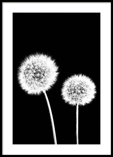 Dandelions Black Poster in the group Prints / Floral at Desenio AB (11218)