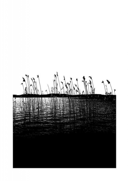 Reed in the Sea Poster in the group Prints / Nature at Desenio AB (11219)