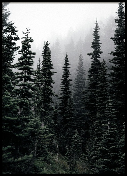 Foggy Woods Poster in the group Prints / Nature prints at Desenio AB (11254)