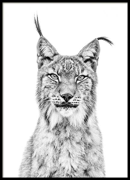Lynx Poster in the group Prints / Animals at Desenio AB (11257)