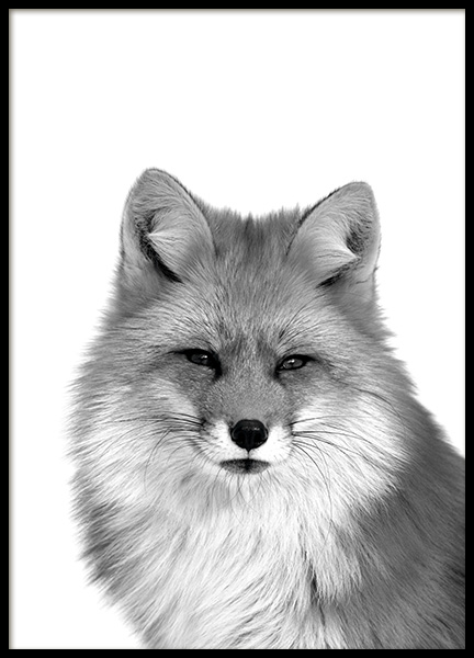 Fox B&W Poster in the group Prints / Black & white at Desenio AB (11258)