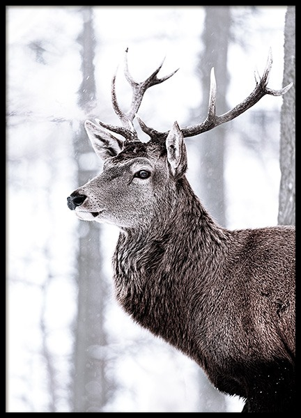 King Deer Poster in the group Prints / Animals at Desenio AB (11419)