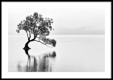 Lonely Wanaka Tree Poster in the group Prints / Nature / Landscapes at Desenio AB (11487)