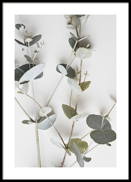 Eucalyptus Wall Poster in the group Prints / Floral at Desenio AB (11495)
