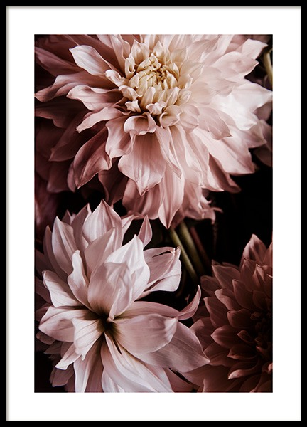 A Pair of Dahlias Poster in the group Prints / Photographs at Desenio AB (11503)