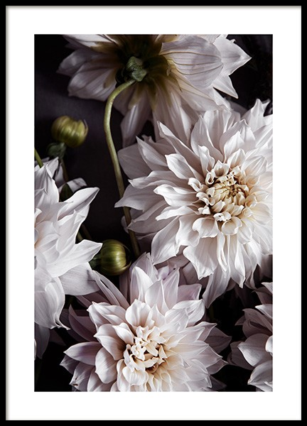 Dahlia Café Au Lait Poster in the group Prints / Botanical / Flowers at Desenio AB (11504)