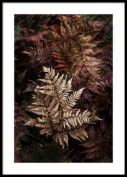 Golden Fern Poster in the group Prints / Photographs at Desenio AB (11510)