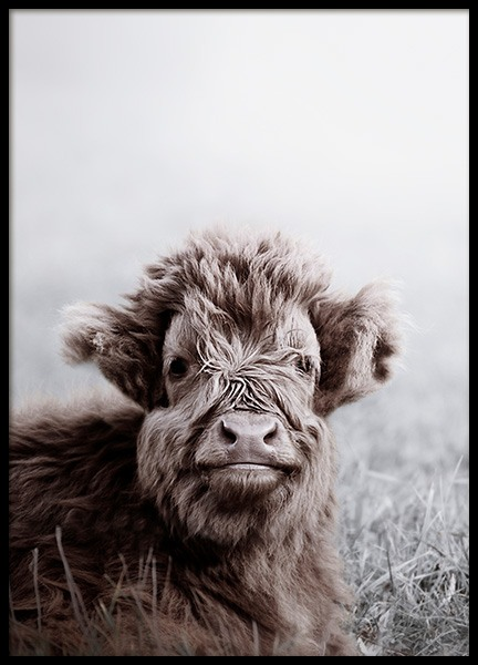 Highland Cattle Calf Poster in the group Prints / Animals at Desenio AB (11549)