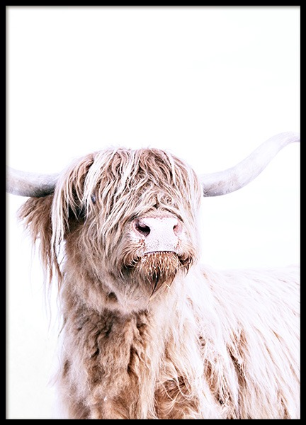 Highland Cattle Portrait Poster in the group Prints / Animals at Desenio AB (11550)