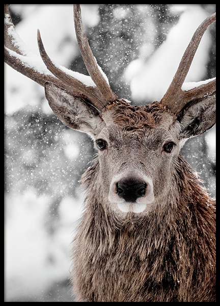 Winter Stag Poster in the group Prints / Photographs at Desenio AB (11554)