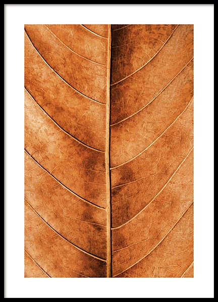 Autumn Leaf Poster in the group Prints / Nature at Desenio AB (11575)
