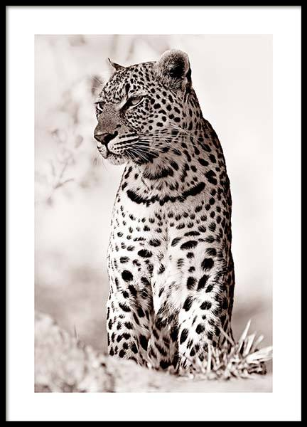 Leopard in the Wild Poster in the group Prints / Animals / Wild animals at Desenio AB (11622)