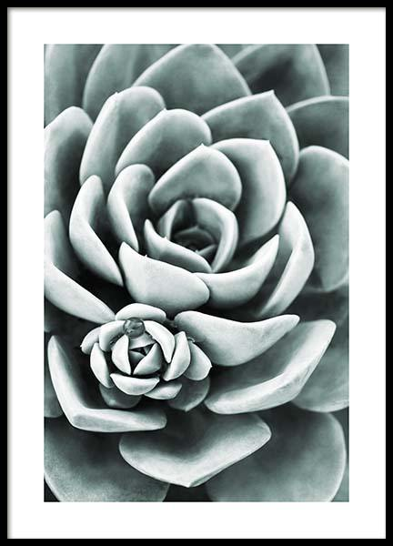 Mint Green Succulent Poster in the group Prints / Floral at Desenio AB (11662)