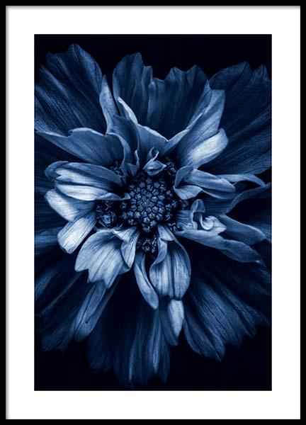 Blue Anemone Poster in the group Prints / Photographs at Desenio AB (11663)