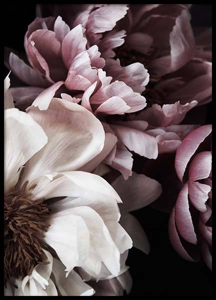 Dreamy Peony No1 Poster in the group Prints / Floral / Flowers at Desenio AB (11775)