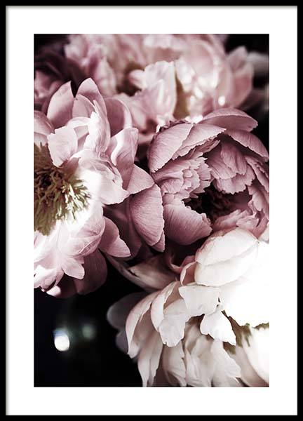 Dreamy Peony No3 Poster in the group Prints / Floral at Desenio AB (11777)