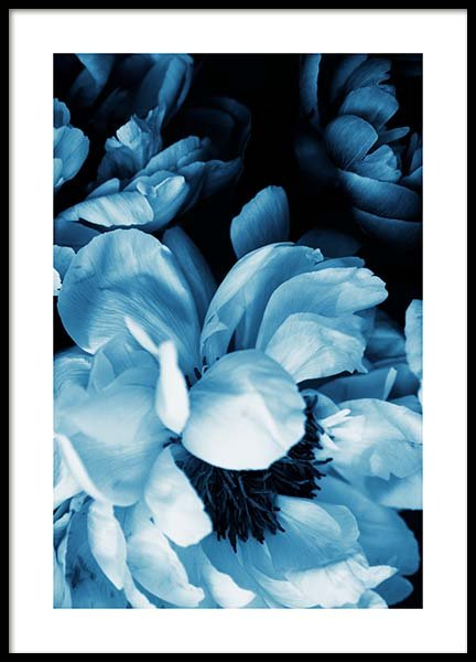 Blue Peony No1 Poster in the group Prints / Floral at Desenio AB (11778)