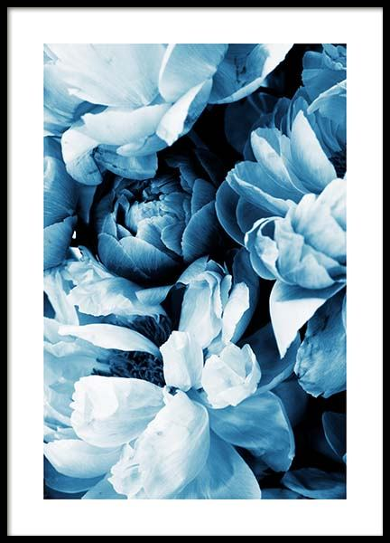 Blue Peony No2 Poster in the group Prints / Floral / Flowers at Desenio AB (11779)