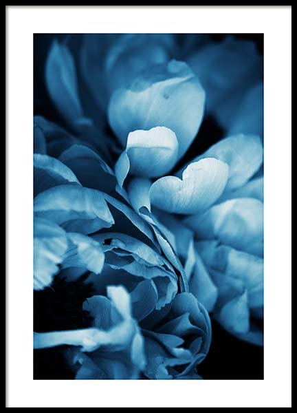 Blue Peony No3 Poster in the group Prints / Photographs at Desenio AB (11780)