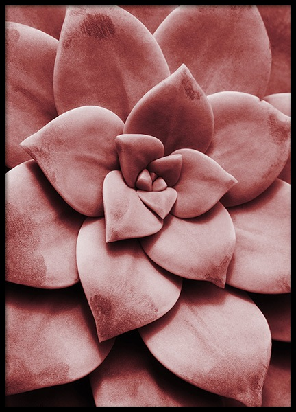Red Succulent No1 Poster in the group Prints / Floral at Desenio AB (11788)