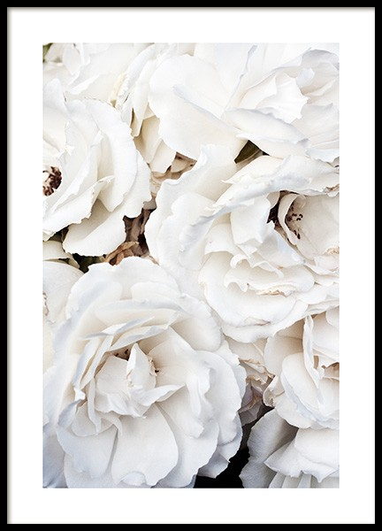 White Roses Poster in the group Prints / Photographs at Desenio AB (11792)