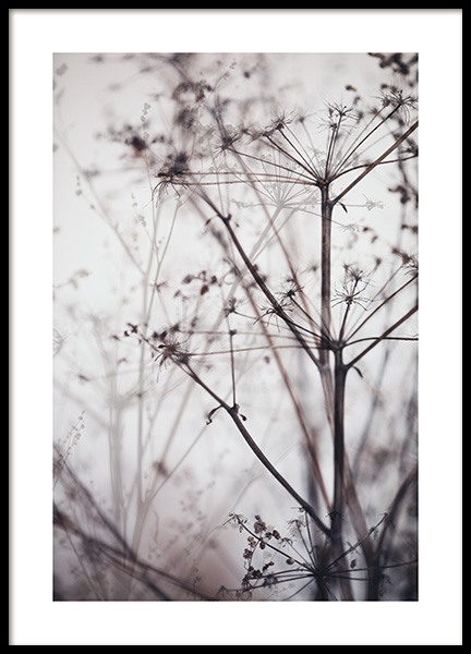 Dry Plant No1 Poster in the group Prints / Photographs at Desenio AB (11794)