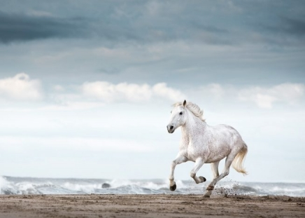 Running White Horse Poster in the group Prints / Photographs at Desenio AB (11849)