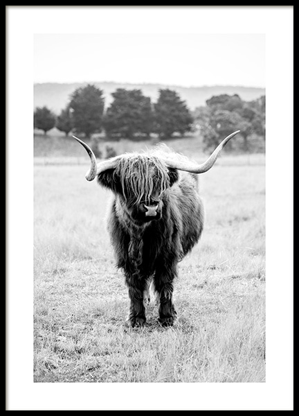 Highland Cattle B&W Poster in the group Prints / Animals at Desenio AB (11854)