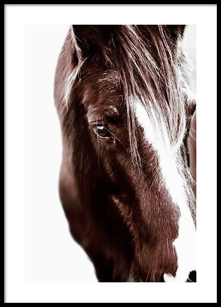 Horse with Blaze Poster in the group Prints / Photographs at Desenio AB (11863)