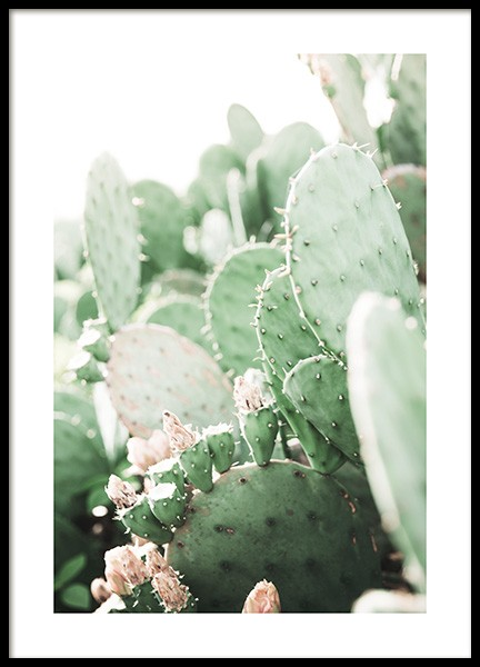 Prickly Pear Cactus Poster in the group Prints / Photographs at Desenio AB (11892)