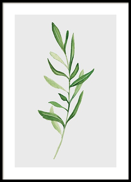 Olive Branch Poster in the group Prints / Illustrations at Desenio AB (11961)