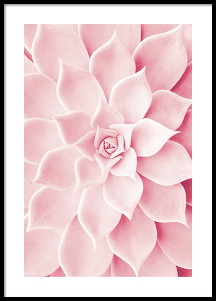 Pink Succulent Poster in the group Prints / Floral at Desenio AB (12021)