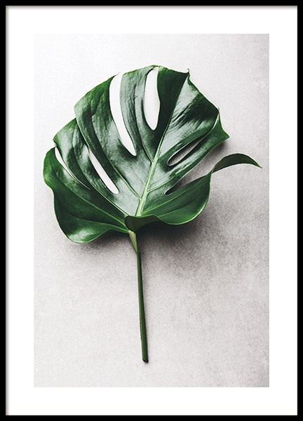 Green Monstera Leaf No1 Poster in the group Prints / Floral at Desenio AB (12050)