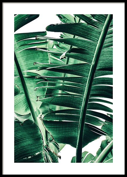 Banana Palm Leaves No1 Poster in the group Prints / Photographs at Desenio AB (12052)