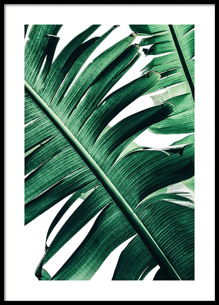 Banana Palm Leaves No2 Poster in the group Prints / Floral at Desenio AB (12053)