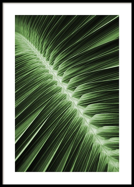 Palm Leaf Symmetry Poster in the group Prints / Floral at Desenio AB (12054)